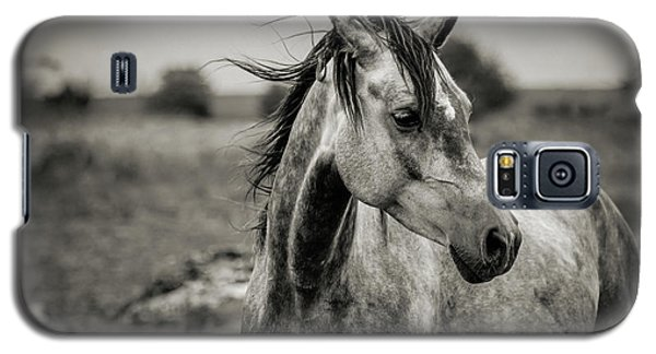 A Horse In Profile In Black And White Galaxy S5 Case