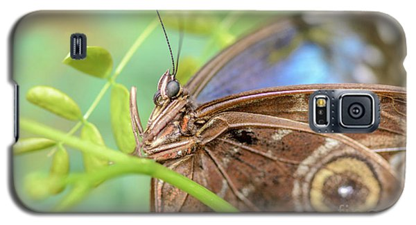Blue Morpho Butterfly Galaxy S5 Case by Tamara Becker