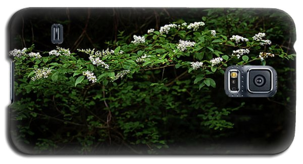Galaxy S5 Case featuring the photograph A Light In The Darkness by Skip Willits