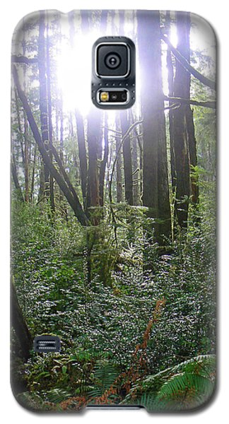 A Light In The Forest  Galaxy S5 Case
