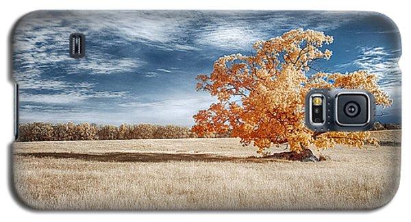 A Lone Tree Galaxy S5 Case