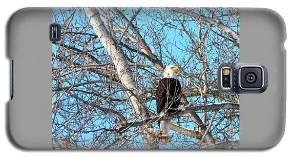 Galaxy S5 Case featuring the photograph A Majestic Bald Eagle by Will Borden