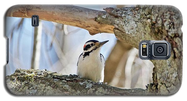 Galaxy S5 Case featuring the photograph A Male Downey Woodpecker  1111 by Michael Peychich