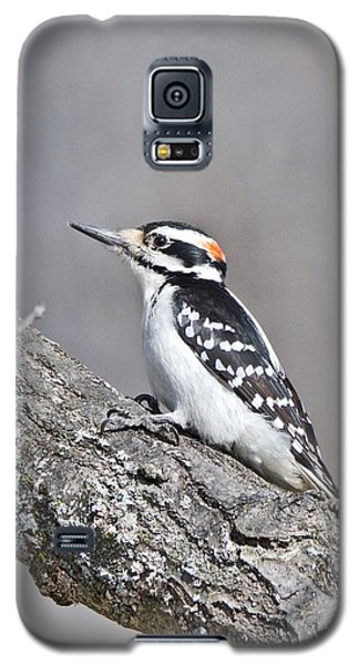 Galaxy S5 Case featuring the photograph A Male Downey Woodpecker 1120 by Michael Peychich