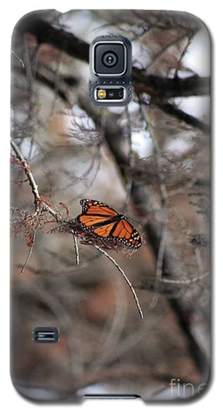 A Monarch For Granny Galaxy S5 Case
