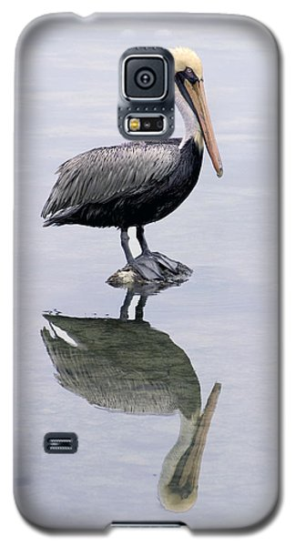 A Noble Bird Is The Pelican Galaxy S5 Case by Carl Purcell