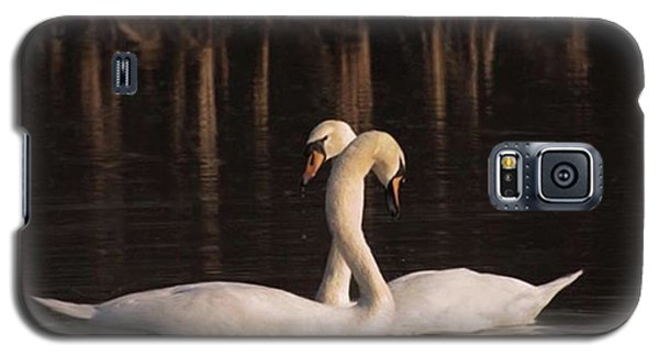 Galaxy S5 Case - A Painting Of A Pair Of Mute Swans by John Edwards