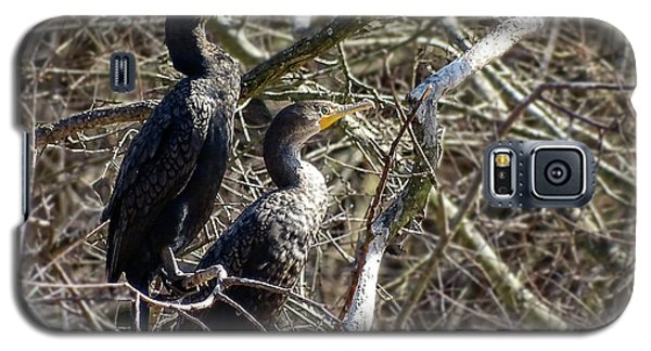 A Pair Of Cormorants Galaxy S5 Case by Melissa Messick