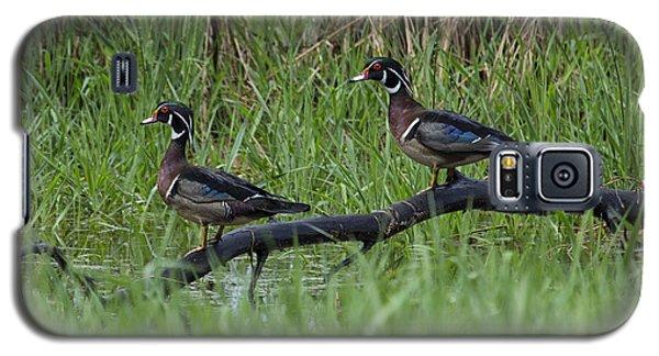A Pair Of Wood Ducks Galaxy S5 Case