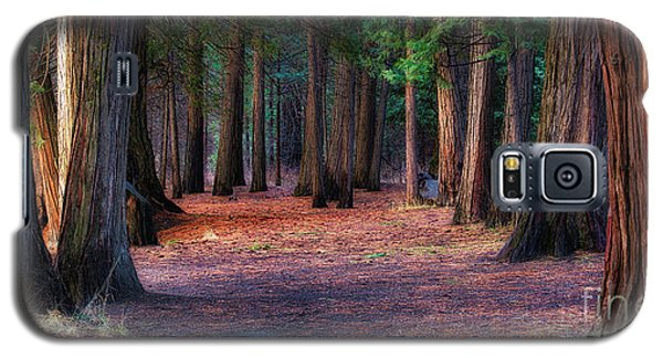 A Path Of Redwoods Galaxy S5 Case