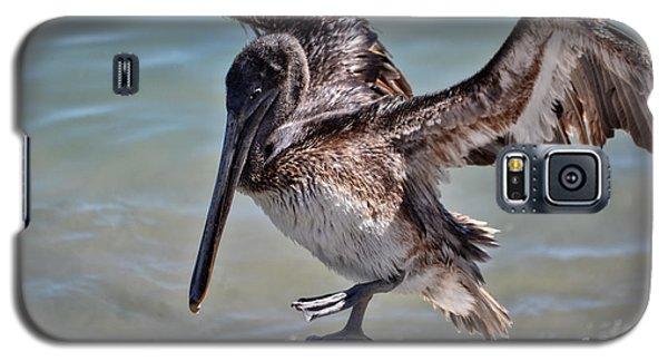 A Pelican Practising A Karate Kick Like Daniel In The Karate Kid Galaxy S5 Case