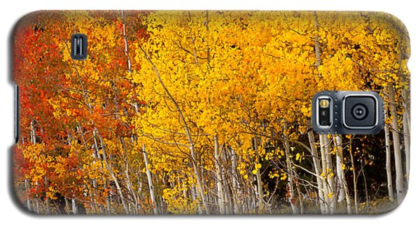 A Place In The Aspen Forest Galaxy S5 Case