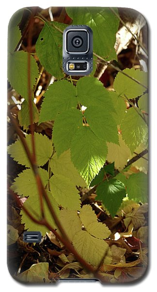 Galaxy S5 Case featuring the photograph A Plant's Various Colors Of Fall by DeeLon Merritt