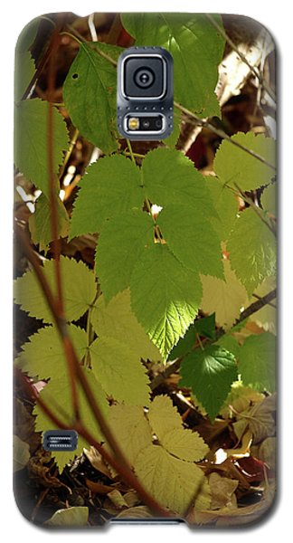 A Plant's Various Colors Of Fall Galaxy S5 Case by DeeLon Merritt
