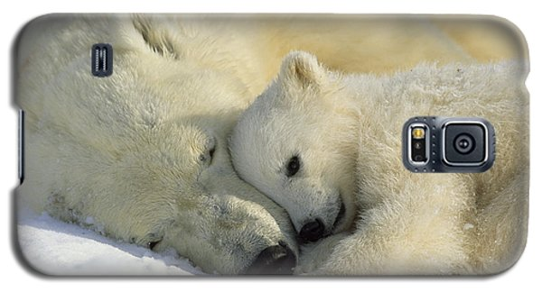 Polar Bear Galaxy S5 Case - A Polar Bear And Her Cub Napping by Norbert Rosing