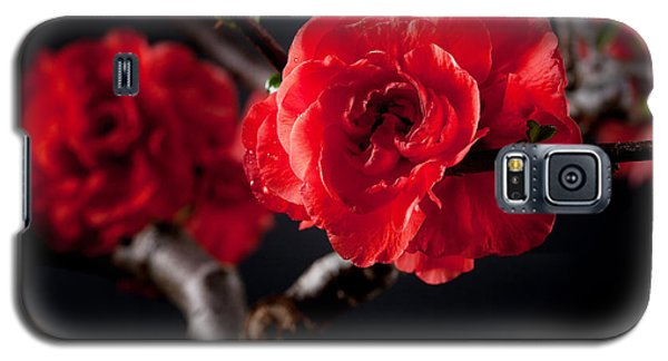 A Red Flower Galaxy S5 Case