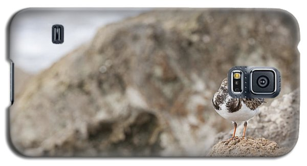 A Ruddy Turnstone Perched On The Rocks Galaxy S5 Case