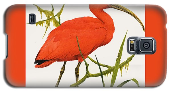 A Scarlet Ibis From South America Galaxy S5 Case by Kenneth Lilly