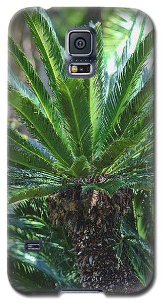 A Shady Palm Tree Galaxy S5 Case