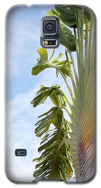A Slice Of Nature Galaxy S5 Case