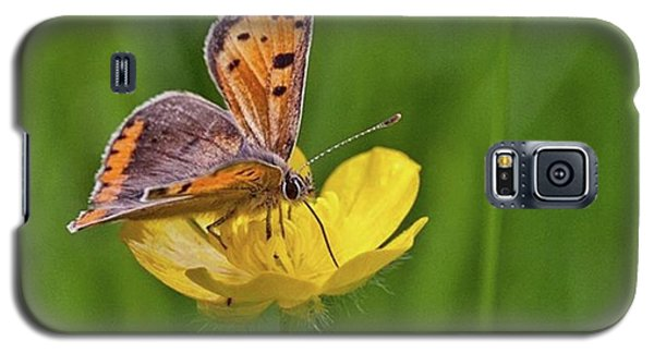 A Small Copper Butterfly (lycaena Galaxy S5 Case