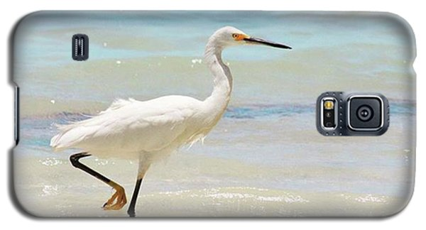 A Snowy Egret (egretta Thula) At Mahoe Galaxy S5 Case by John Edwards