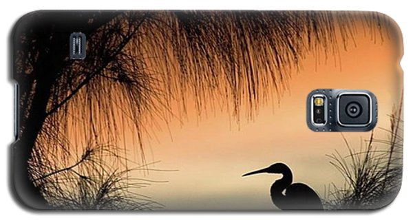 A Snowy Egret (egretta Thula) Settling Galaxy S5 Case by John Edwards