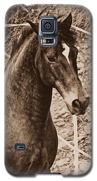 A Spanish Noble Galaxy S5 Case