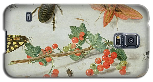 A Sprig Of Redcurrants With An Elephant Hawk Moth, A Magpie Moth And Other Insects, 1657 Galaxy S5 Case