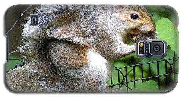 A Squirrelly Portrait Galaxy S5 Case
