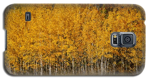 A Stand Of Aspen Galaxy S5 Case