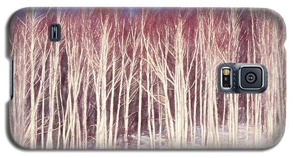A Stand Of White Birch Trees In Winter. Galaxy S5 Case