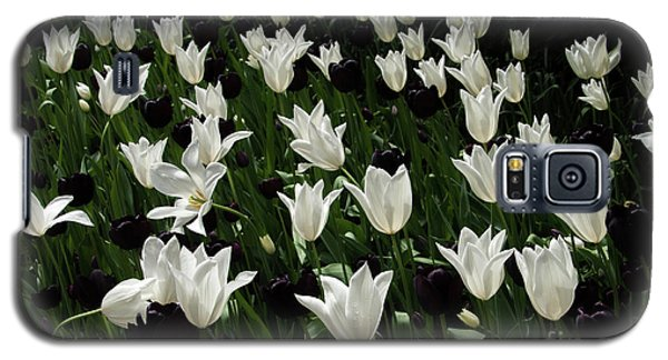 A Study In Black And White Tulips Galaxy S5 Case by Victoria Harrington