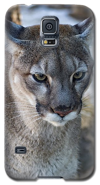 A Stunning Mountain Lion Galaxy S5 Case