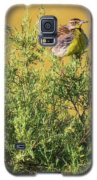 A Tad Ruffled Galaxy S5 Case