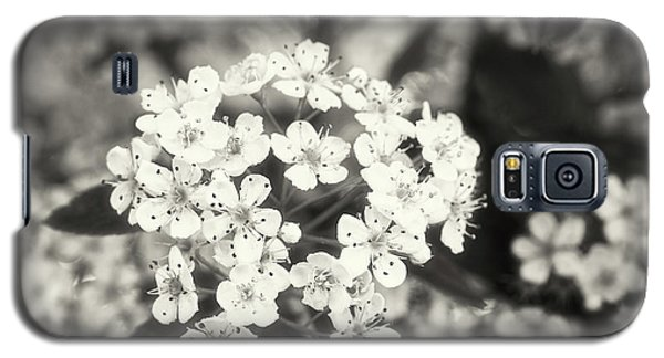 A Thousand Blossoms In Sepia 3x4 Flipped Galaxy S5 Case