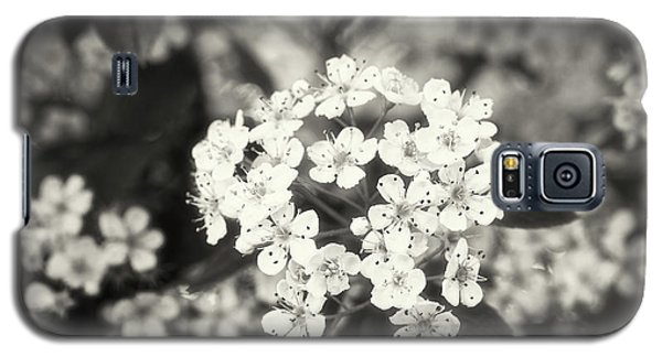 A Thousand Blossoms Sepia 3x2 Galaxy S5 Case