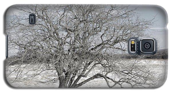 A Tree In Canaan Galaxy S5 Case