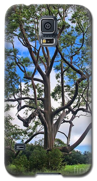 Galaxy S5 Case featuring the photograph A Tree In Paradise by DJ Florek