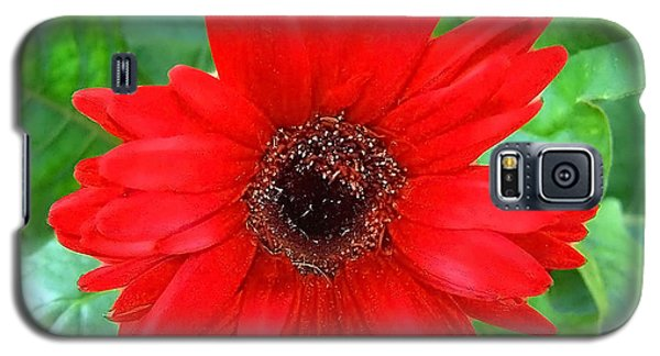 Galaxy S5 Case featuring the photograph A True Red by Sandi OReilly