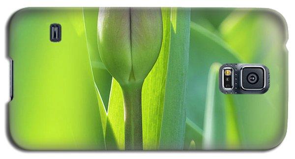 Green Pink Wall Art - Spring Tulips Keukenhof Flower Garden Photography Art Print Galaxy S5 Case