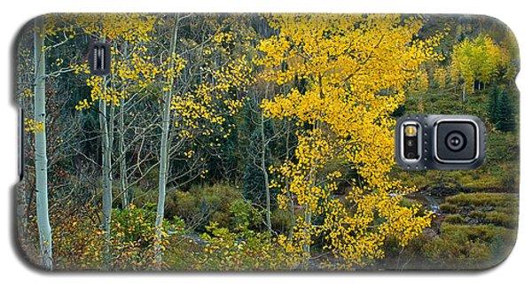 A Walk In The Aspen Forest Galaxy S5 Case
