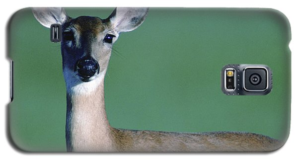 A White-tailed Deer On The Prairie Galaxy S5 Case