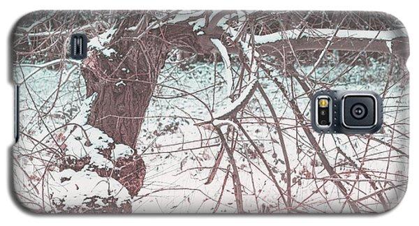 A Winter Tree Galaxy S5 Case