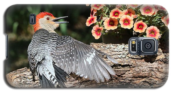 A Woodpecker Conversation Galaxy S5 Case