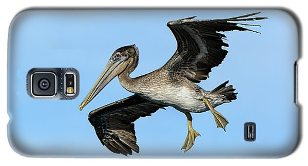 A Young Brown Pelican Flying Galaxy S5 Case