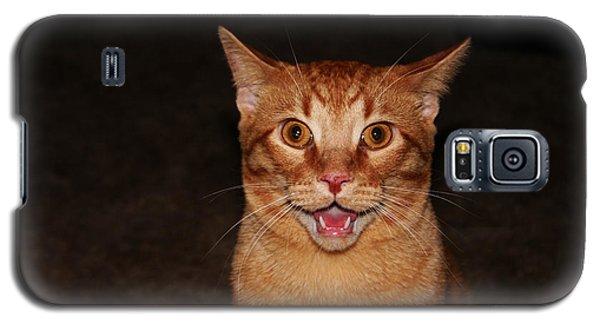 Aaaaaahhhhhhhhhh Galaxy S5 Case