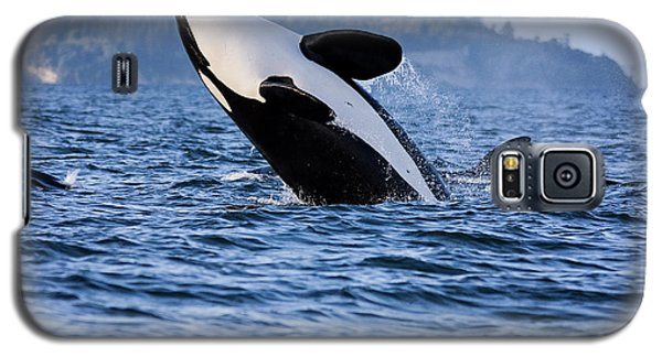 Absolutely Free - Whale Art Galaxy S5 Case