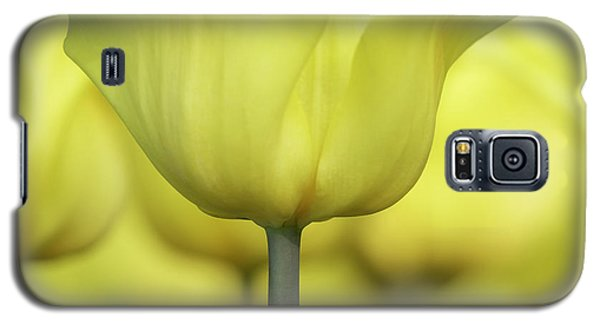 Galaxy S5 Case featuring the photograph Abstract Yellow Tulips Flowers Photography Online Art Print Shop by Artecco Fine Art Photography