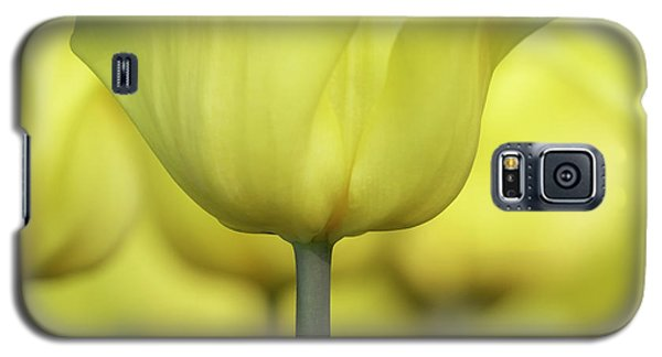 Abstract Yellow Tulips Flowers Photography Online Art Print Shop Galaxy S5 Case
